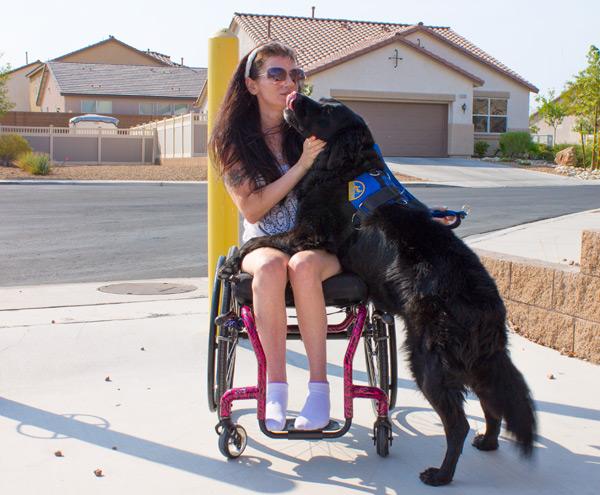 Pain Killers Chronic Illness Service Dogs OTC Medications